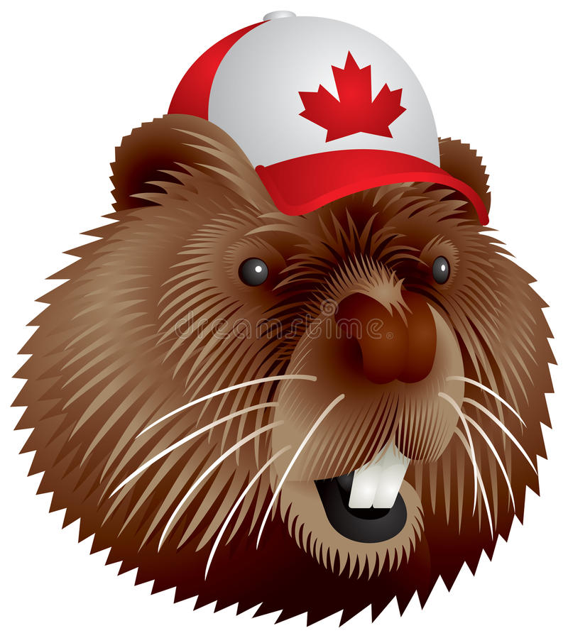 Canadian beaver vector illustration