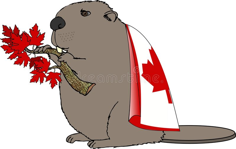 Download Canadian Beaver stock illustration. Image of funny, flag - 78265