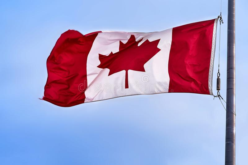 Canadian flag flying in light breeze on top of metal pole against blue sky vector illustration
