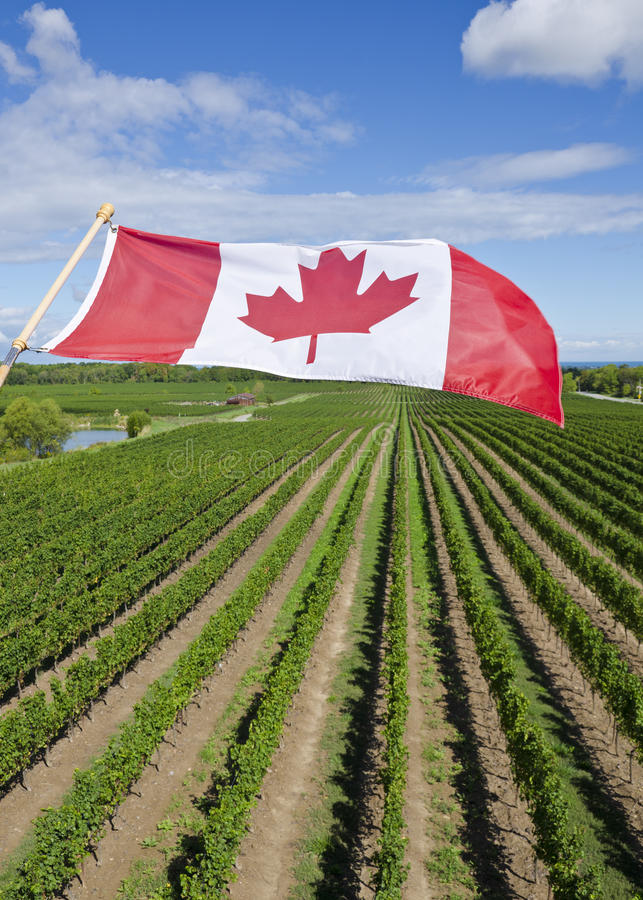 Canadian Flag Flying Over a Vineyard #3. The Canadian maple leaf flag flying high over a vineyard in the Niagara wine region #3 stock image
