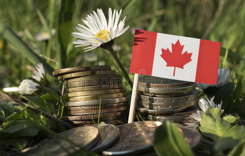 Canadian flag with stack of money coins with grass. And flowers royalty free stock images
