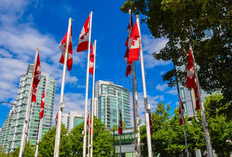 Canadian Flags against blue sky in BC. stock images
