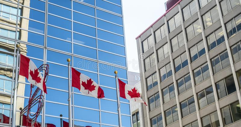 Canadian flags in the wind stock photography
