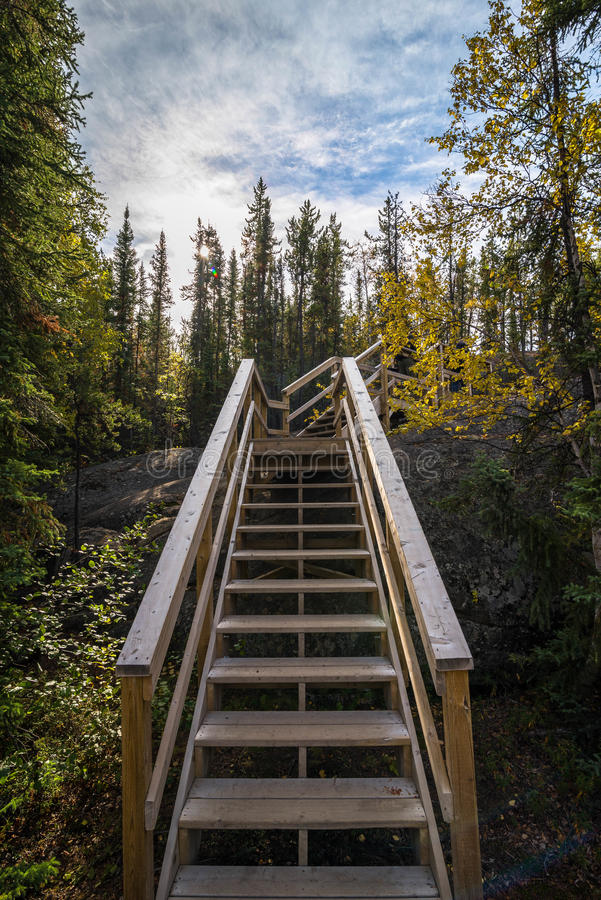 Free Canadian Forest Trail 2 Royalty Free Stock Photography - 45141107