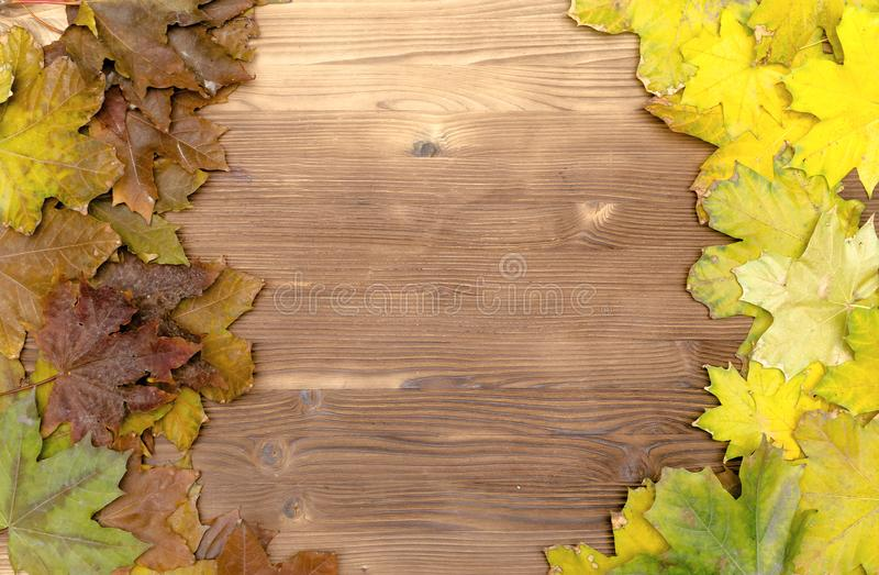 Autumn fallen leaves on wooden board surface background with copy space. stock photography