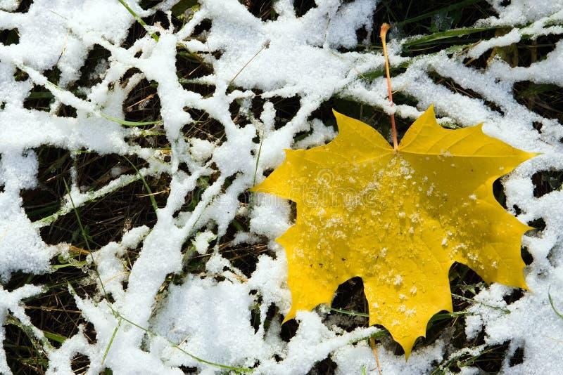 Canadian Maple Leaf Stock Image