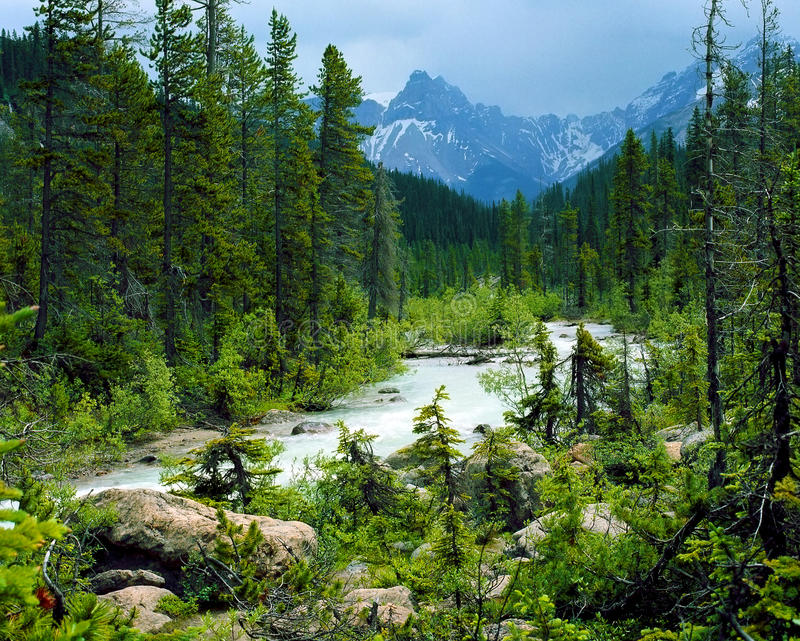 Canadian Rockies royalty free stock photo