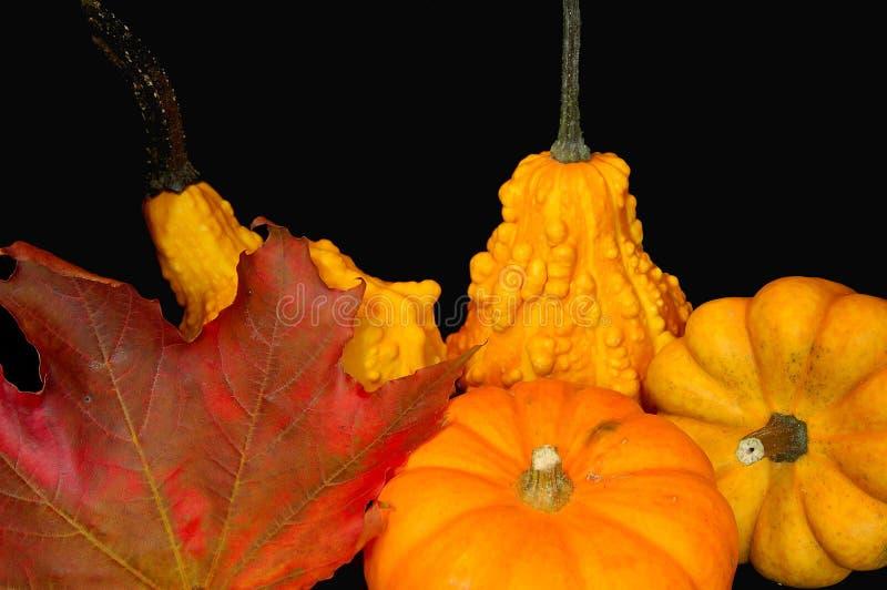 Download Canadian Thanksgiving 5 stock photo. Image of orange, autumn - 6623886