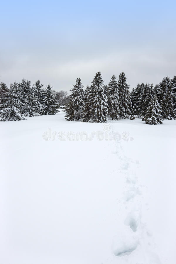 Canadian winter landscape royalty free stock photos
