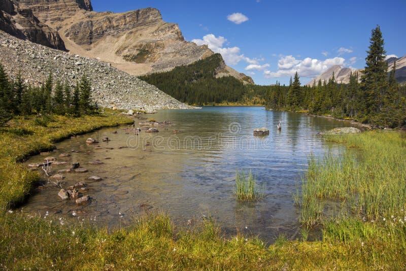 Canadiense alpino Rocky Mountains del parque nacional de Banff del paisaje del verano del paisaje del lago moose imágenes de archivo libres de regalías