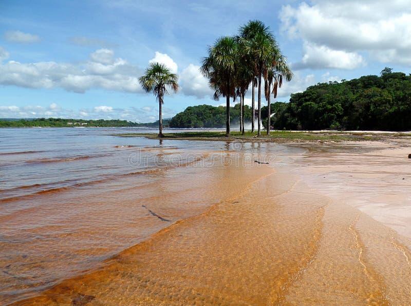 Canaima ладоней стоковое фото rf