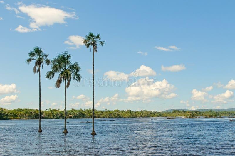 Download Canaima lagoon, Venezuela stock image. Image of blue - 12919443