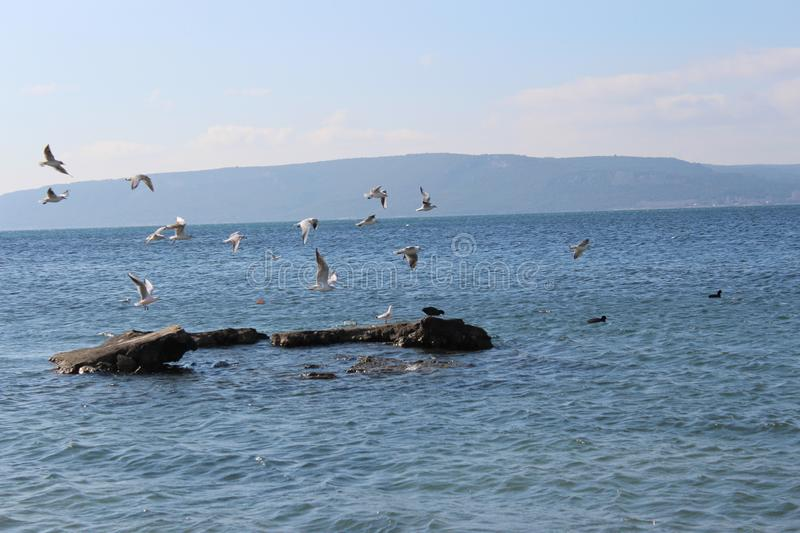 Download Sea And Calm Skies And Gulls Stock Image - Image of throat, cloudy: 110146725