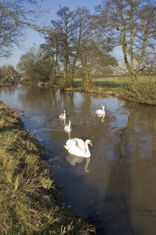Download Canal stock photo. Image of preston, avon, cygnet, rivers - 4626214