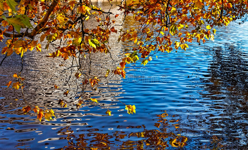 Download Canal in Autumn stock photo. Image of outdoor, nature - 26984132