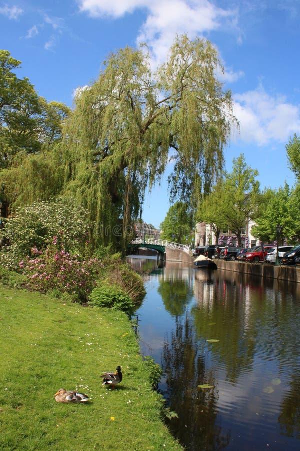 Canal, canalbank fuera de Hortus Botanicus, Leiden imagen de archivo libre de regalías