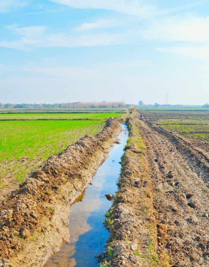 Canal da irrigação imagens de stock royalty free