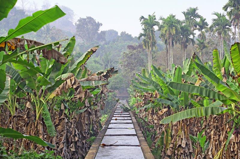 Canal da irrigação através da plantação de banana de Kerala fotografia de stock