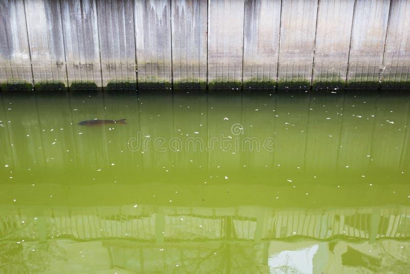 canal de Chiba photographie stock libre de droits