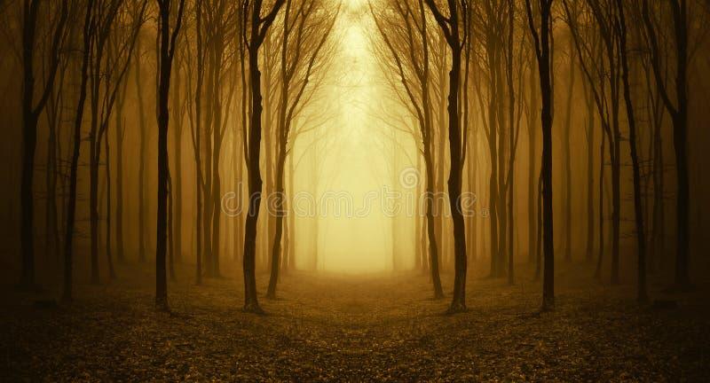 Canal de la trayectoria un bosque extraño con niebla en otoño imagen de archivo libre de regalías