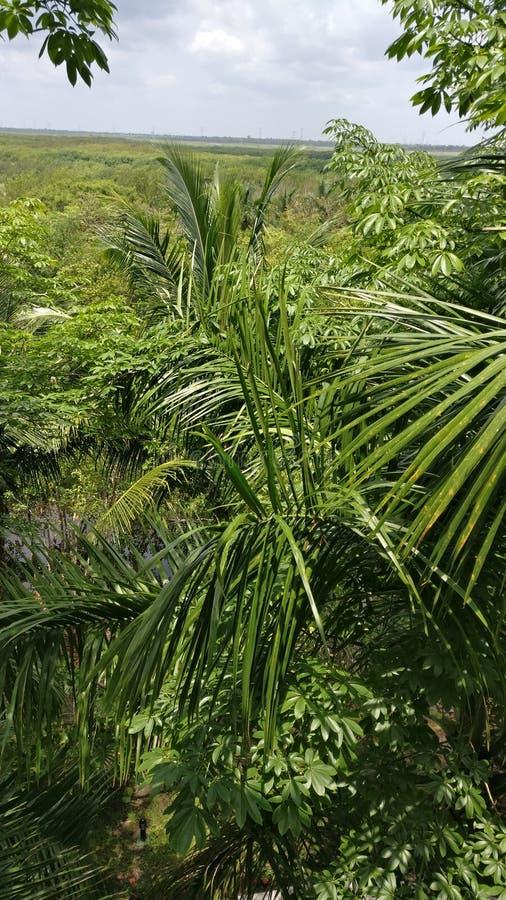 Canal de la visión los palmtrees fotos de archivo libres de regalías