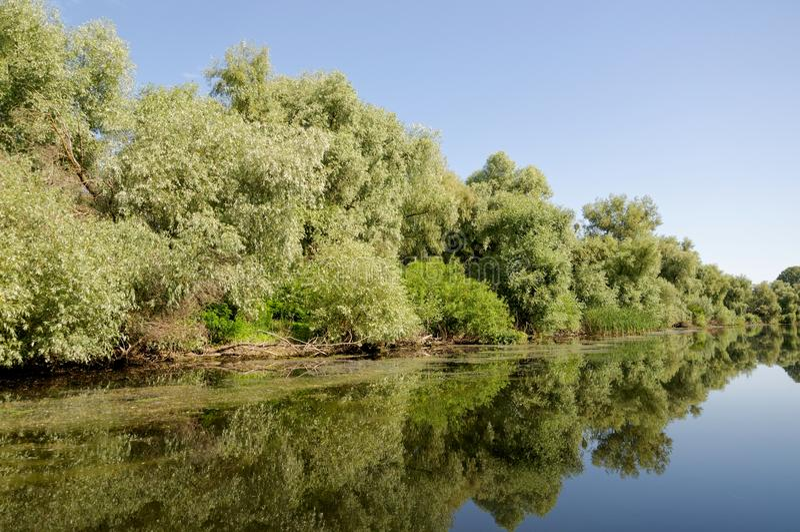 Canal de Litcov, delta de Danúbio, Romênia foto de stock