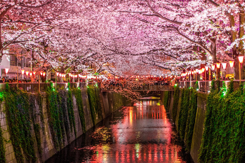 canal de sakura imagens de stock royalty free