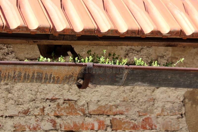 Canal dilapidado viejo aherrumbrado del metal llenado de la suciedad y de las plantas crecientes montadas en el edificio de ladri foto de archivo