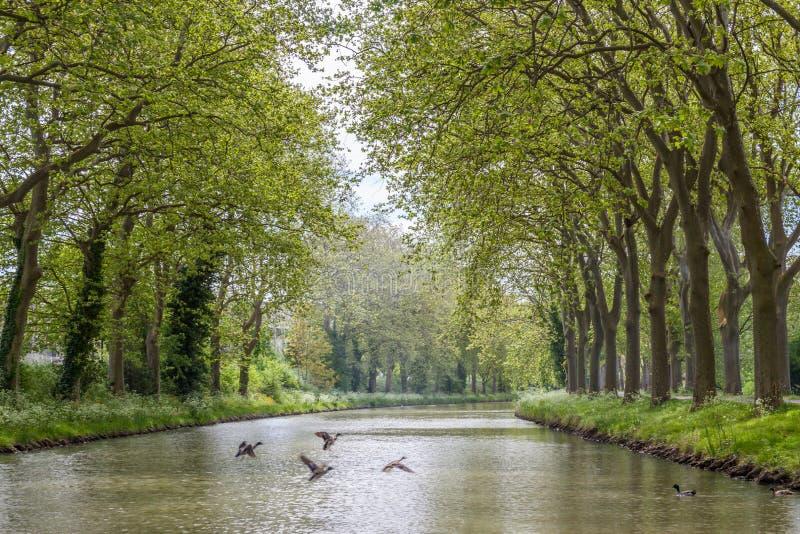 Canal du Midi fotografía de archivo