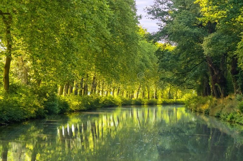 Canal du Midi, reflexión de los árboles del sicómoro en el agua, Francia fotografía de archivo