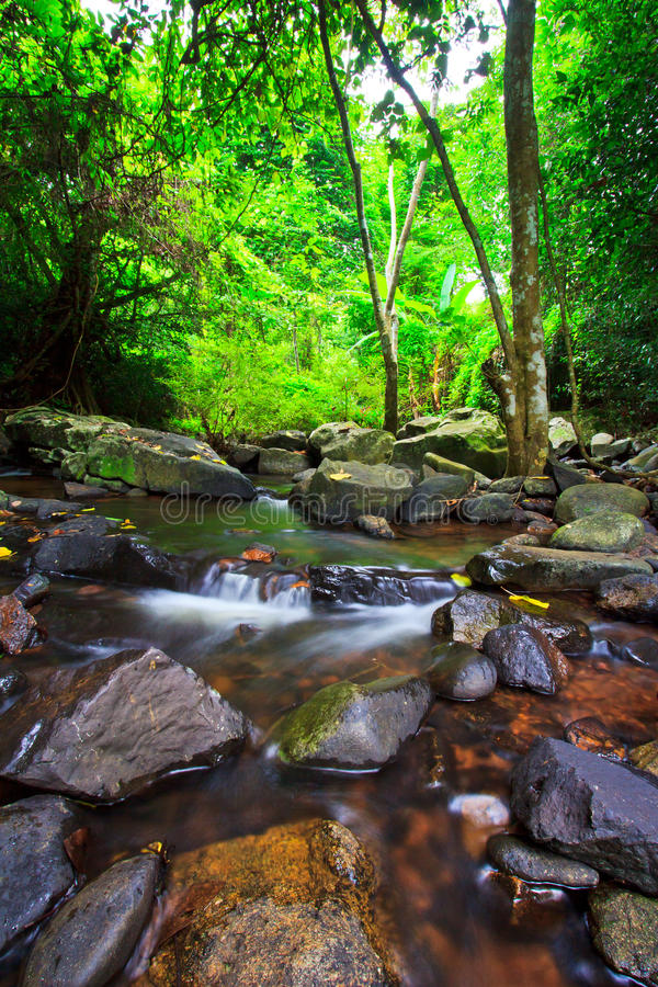 Canal en el bosque tropical fotos de archivo libres de regalías