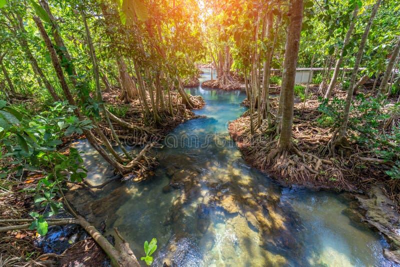 Canal esmeralda claro surpreendente com floresta Krabi Tailândia dos manguezais fotografia de stock royalty free