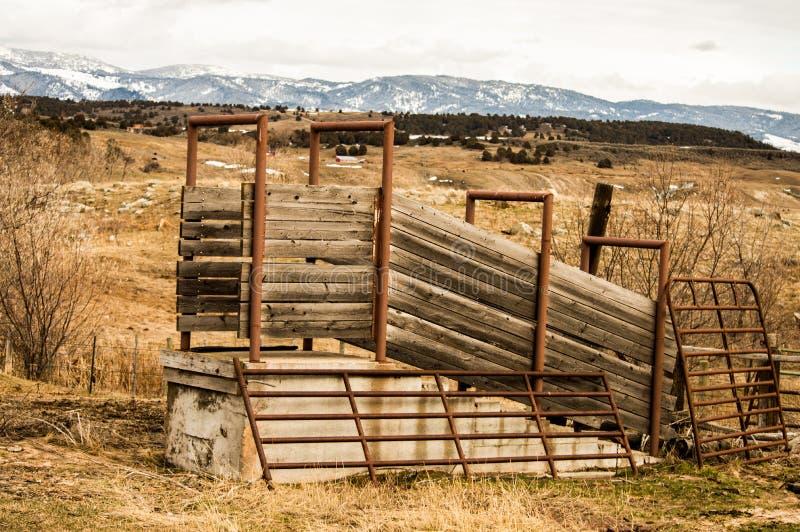 Canal inclinado de cargamento del ganado imagen de archivo libre de regalías