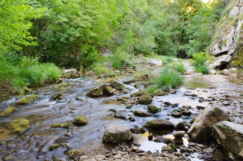 Canal inclinado del río en madera fotografía de archivo libre de regalías