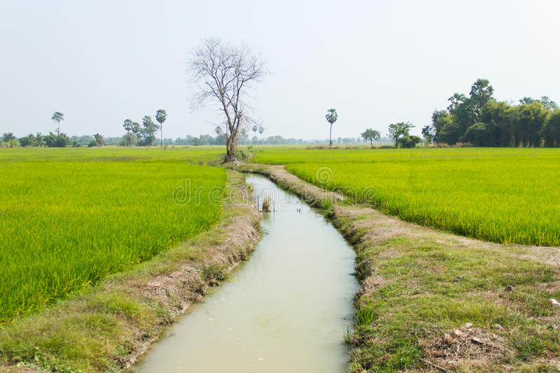 Agricultural Irrigation Canal : Canal irrigation stock photo image of crop rural farm