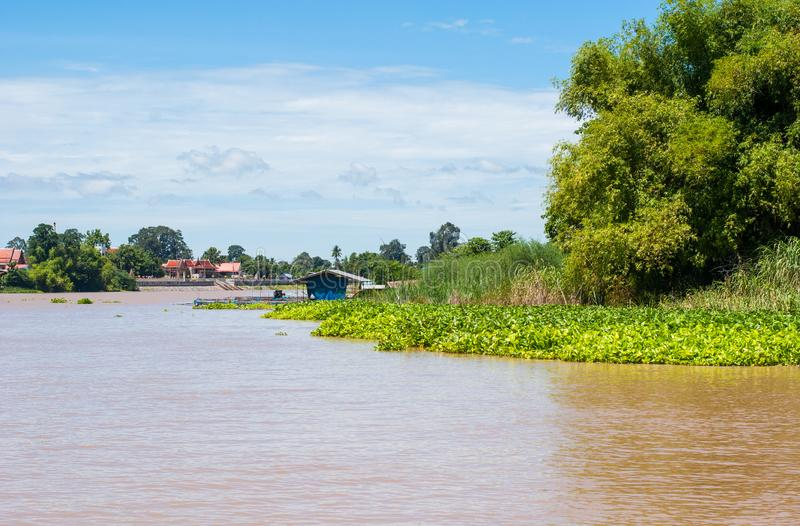 Canal landscape with green water plant, trees, house, Thai temple and blue sky, local lifestyle stock image