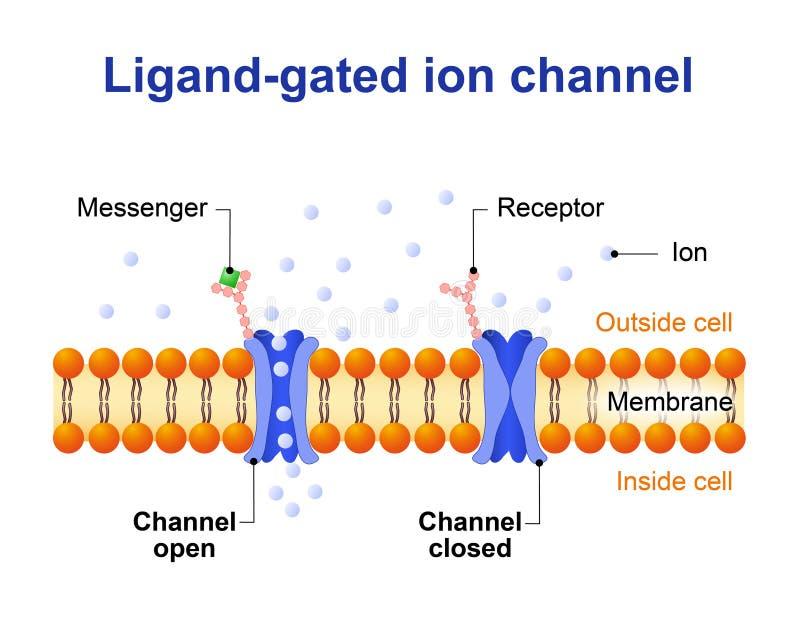 canal Ligand-à déchenchements périodiques d'ion illustration libre de droits