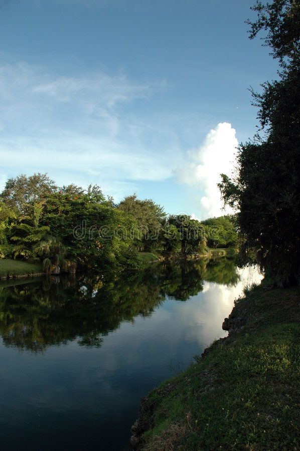 Canal In Miami With Vegetation Stock Image