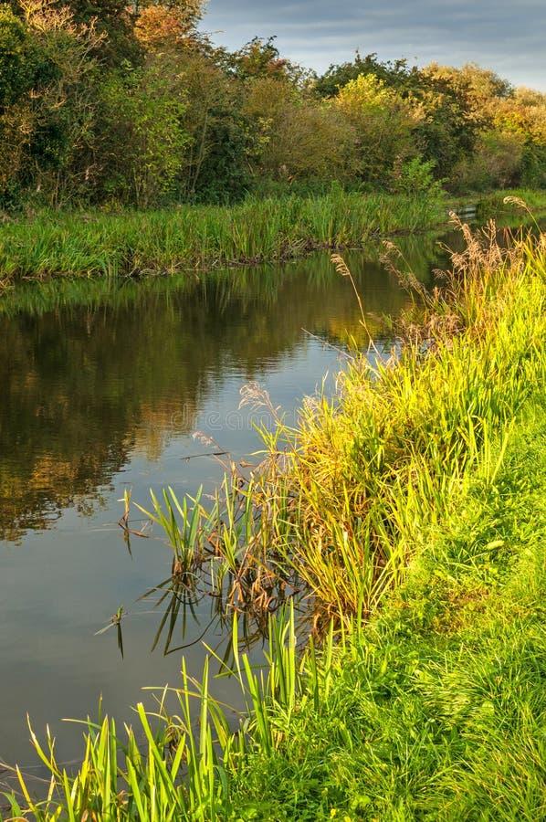 Canal paisible, voie d'eau avec la banque canneuse verte et ombre images stock