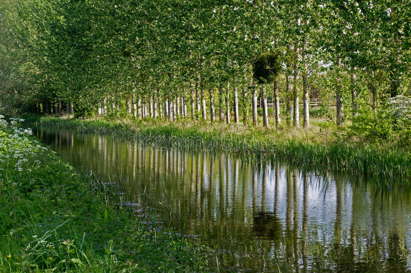 Canal reflections,bridgewater , to,taunton , canal, Somerset, U.K. royalty free stock images