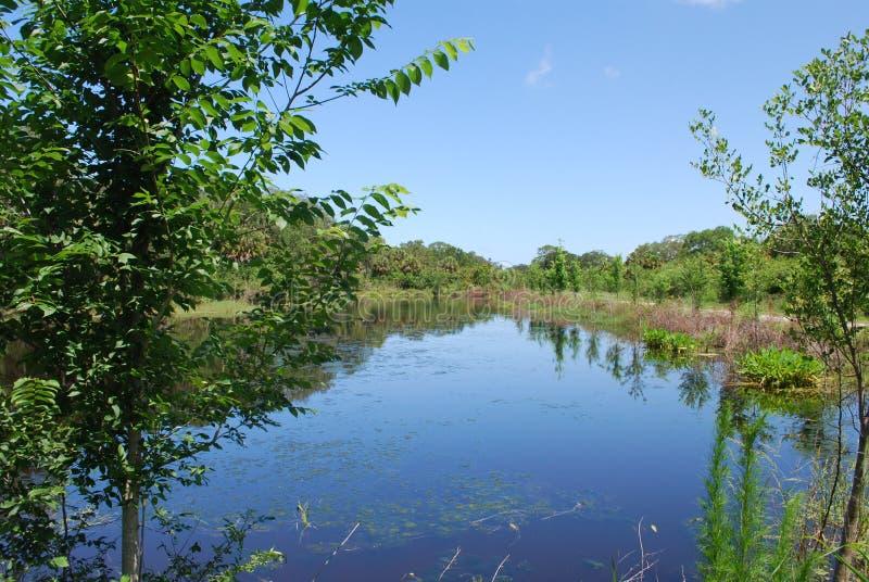Canal sereno en una reserva natural en Sarasota la Florida fotos de archivo libres de regalías