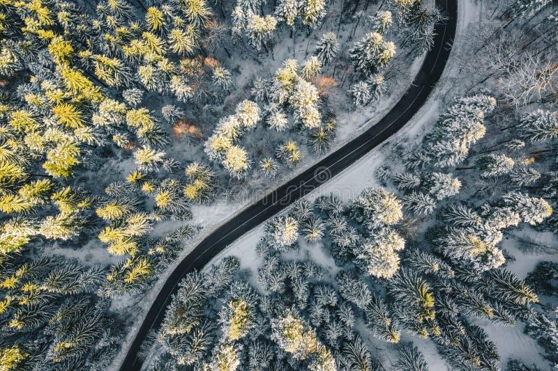 Canal vacío del camino un bosque en la estación del invierno imagen de archivo libre de regalías