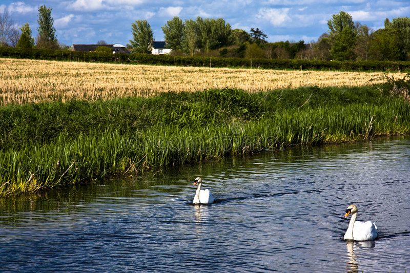 Canal wildlife. The Bridgwater and Taunton Canal - Opened in 1827 stock photo
