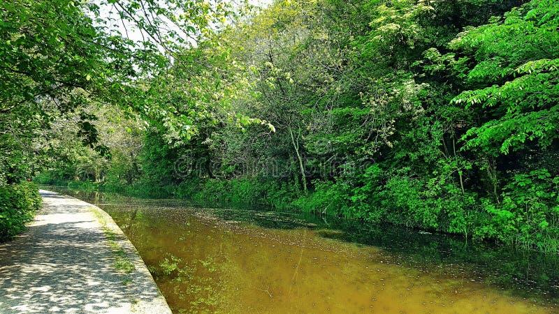 Canal y árboles imagenes de archivo