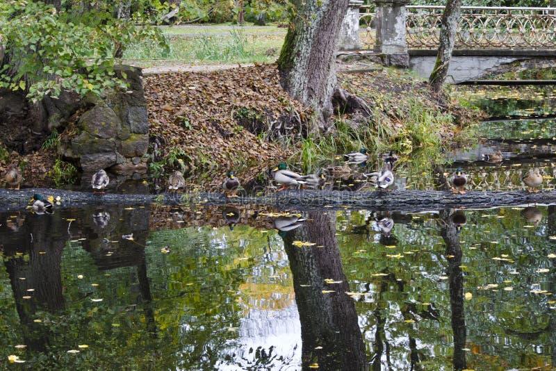 Canale artificiale alimentato dal fiume di Versupite fotografie stock libere da diritti