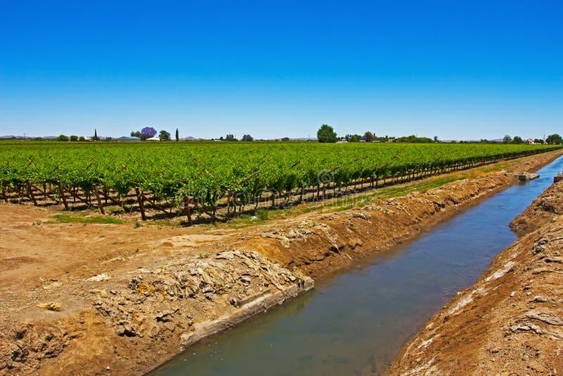 Canale di irrigazione e vigneto verde immagine stock