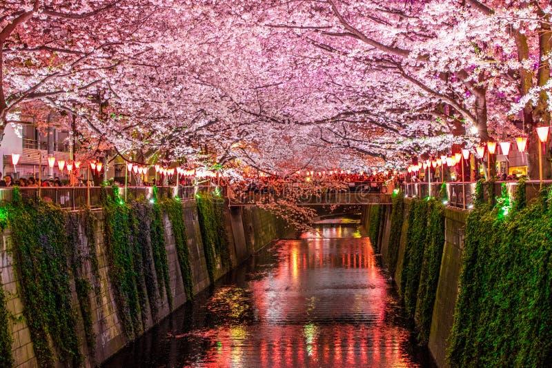 canale di sakura immagini stock libere da diritti