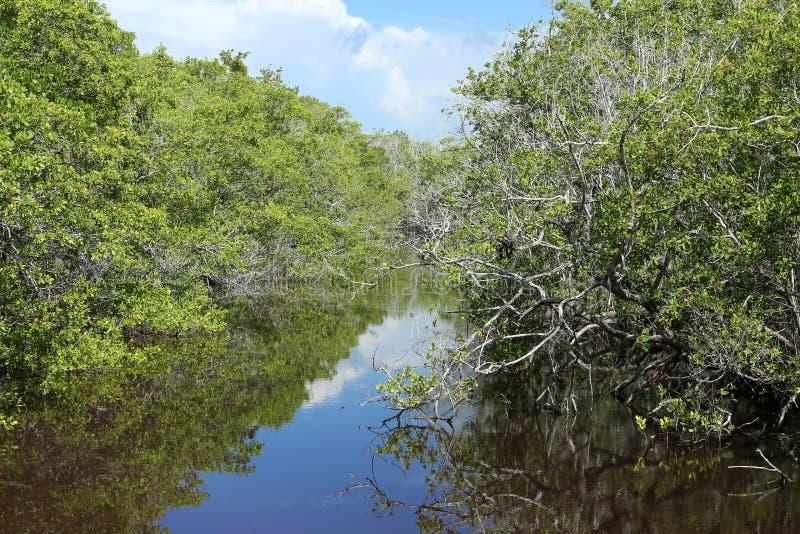 Canales de Ding Darling en la isla de Sanibel, la Florida, los E.E.U.U. fotografía de archivo