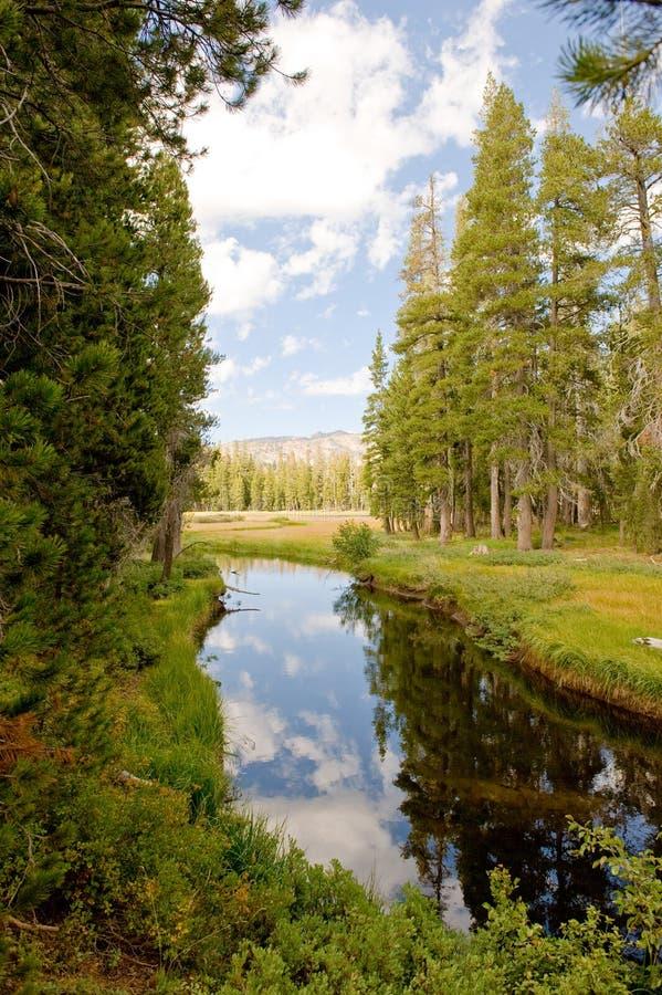 Canaleta de água através da floresta foto de stock royalty free