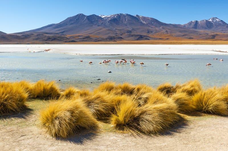 Canapa-Lagune mit Flamingos, Bolivien lizenzfreie stockfotos